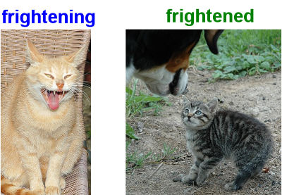 frightening and frightened cats